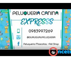 Alquila La Peluqueria Canina a domicilio MAS ANTIPULGAS GRATIS